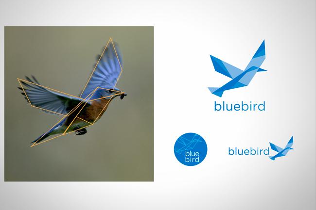bluebird logo concept